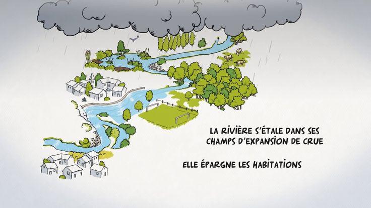 Film d'animation sur la gestion des milieux aquatiques et prévention des inondations Redonnons à nos rivières un fonctionnement naturel pour limiter les crue...