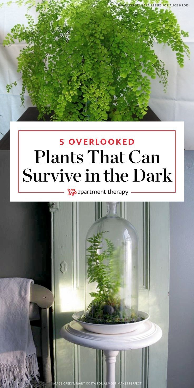 overlooked plants that can survive in the almost dark plants