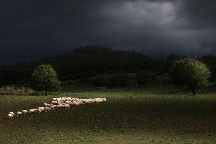 #интересное  Овцы и Тоскана вместо офисной конуры (14 фото)   Фотограф-любитель Марко Сгарби (Marco Sgarbi), в какой-то момент решил бросить свою унылую и однообразную офисную работу, ради свежего воздуха, ведения натурального хозяйства, а также прочих сопутствующих пр�