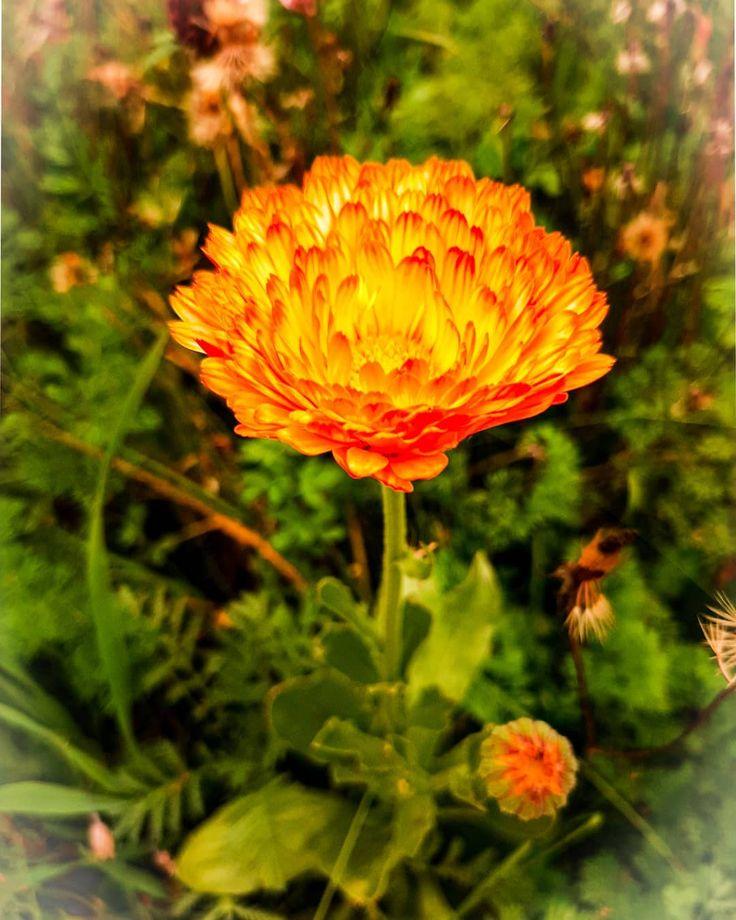 #hohenbogenwinkel #steffisfotografie #herbstdekoration #flower #naturpur  – Garten
