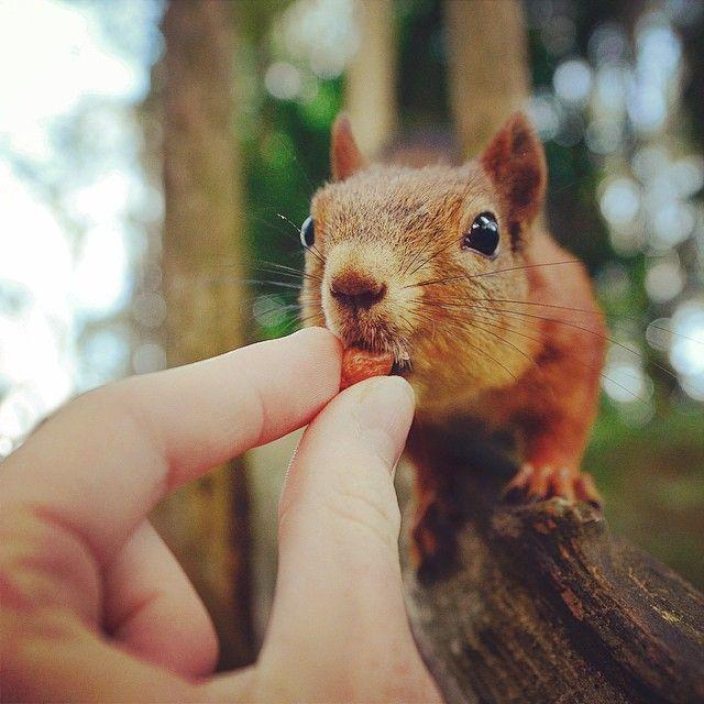 Finnish Squirrel-Whisperer Feeds Wild Animals For Cute Wildlife Photos | Bored Panda