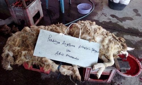 Harga Kambing Aqiqah yang murah namun tetap berkualitas dan sesuai syariat kami hadirkan untuk anda. Dengan pengadaan kandang kambing sendiri, kami dapat mengontrol dan memelihara kambing aqiqah dengan professional. Sehingga kambing aqiqah yang dihasilkan benar-benar sehat, bebas cacat dan sesuai syariat.  Terimakasih kepada keluarga besar Bapak Aris Munandar yang telah mempercayakan menggunakan layanan Aqiqah di Ngaglik Sleman Yogyakarta. Untuk Putranya yang bernama Praditya Aryaputra…