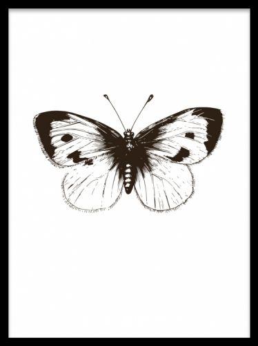 White cabbage butterfly plakat. Vintage sommerfugl, poster. Smuk sommerfugl på sort-hvid poster. Fin illustration med vintagestil. Fin sammen med både posters/plakater i sort-hvid og i farve. Vi har flere posters med sommerfugle i vores sortiment. Printet på tykt, ubestrøget papir.