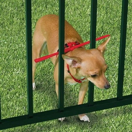 Dog-Harness: The escape prevent dog-harness is meant for smaller pets who usually escape through the spacing of your gate, fence or railing. It is sure to keep your beloved wandering pet within your property, but you'll have to come up with another idea to contain the more stealthy ones.