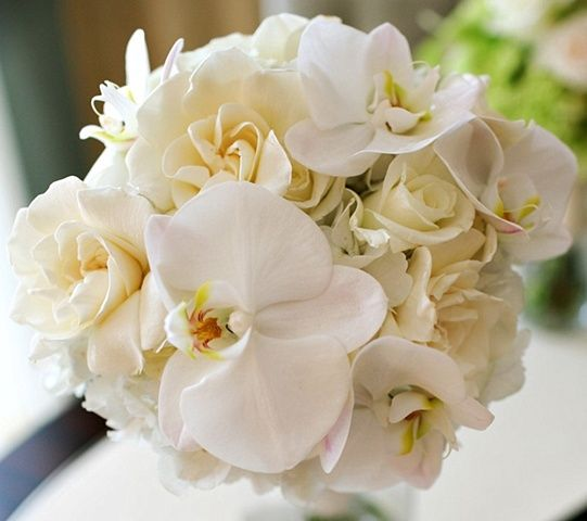 All White Bridal Bouquet composed of Phalaenopsis Orchids, Gardenias, and Roses.  Phalaenopsis and Gardenia Bridal Bouquet