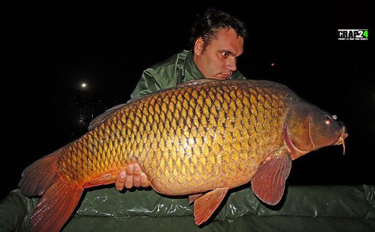 """Marian Neagu: """"Reușesc destul de greu să scot peștele de sub plaur, iar după un dril de 10-15 minute, timp în care mi-a luat și următoarea lansetă, am reușit să...""""  Detalii și FOTO AICI >>> http://www.crap24.ro/final-de-sezon-cu-crapi-mari-pe-apa-mica/"""