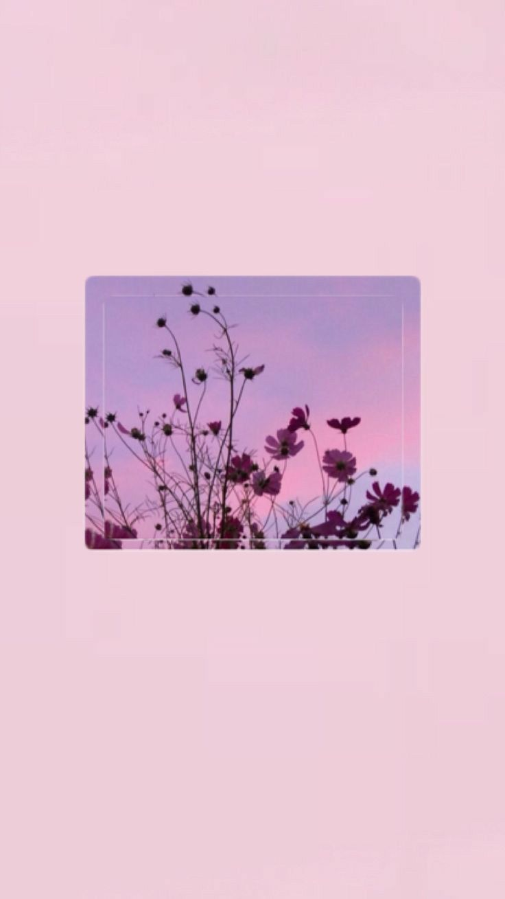 Pin By Kuncup On Wallpaper Aesthetic Wallpapers Pretty Wallpapers Iphone Wallpaper Pinterest