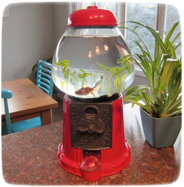 Betta Fish Tanks Petsmart Betta Fish Tank Fish Tank Betta Fish