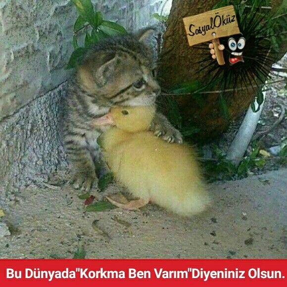 Hayat sevince, paylaşınca güzel! #sosyalöküz #öküz #caps #insan #beğen #yeni #komik #beğeni #kedi #civciv #sevgi #yavru #masum #dost #dostluk #masumiyet #hayat #korku