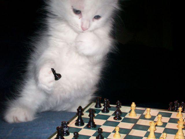 Passando pra tirar o pó daqui do blog, quase abandonado, e também deixar minha gratidão pela graça de ter aprendido a jogar xadrez.   M...