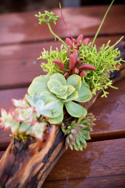 Dekoration aus Treibholz selber machen arten pflanzen