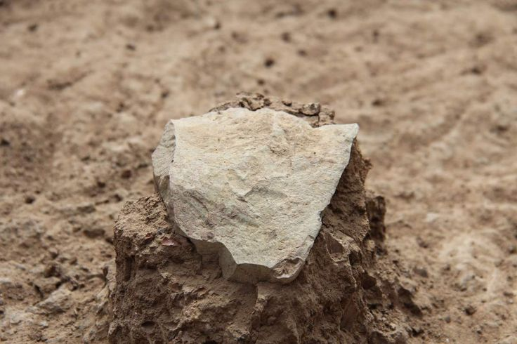 Oldest Known Stone Tools Discovered in Kenya - West Turkana Archaeological Project shows the excavation of a stone tool found in the West Turkana area of Kenya. - The tools are about 3.3 million years old