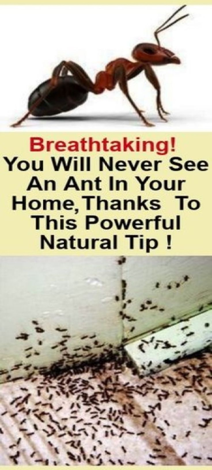 How to get rid of the ants at your house with a natural