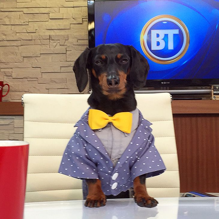Pin by Crusoe the Celebrity Dachshund on Crusoe the ...
