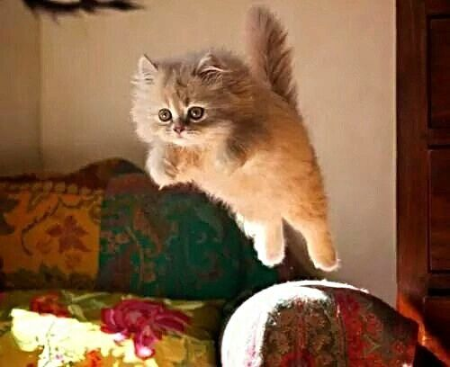 Its hump day! Lets jump over this hurdle together. The weekends are almost here :) #cats #cat #catlover #catsofinstagram #awww #instacat #catstagram #catsagram #lovecats #instagramcats #Neko #cute #animals #feline #felines #catcat #catcam #kittygram #kitten #kitty #kittycat #kittylove #instakitty #catsofig #funny #igcats #love #paws #kittens automatic cat litter box  cat cats kitty cute catlover catsofinstagram catcam instacat catstagram catsagram lovecats cat product reviews