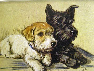 Lucy Dawson Scottish Terrier Sealyham Friends Collector Card 1930 40s Art Mat | eBay