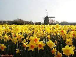 Afbeeldingsresultaat voor lente landschap