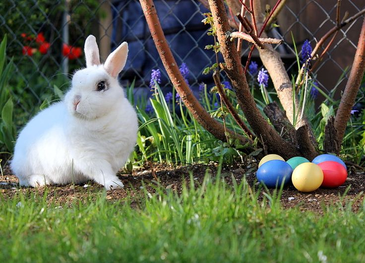 Try these fun Easter activities with your kids this Easter holiday http://bit.ly/easter-egg-activities