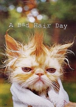 Image result for picture of bad hair day