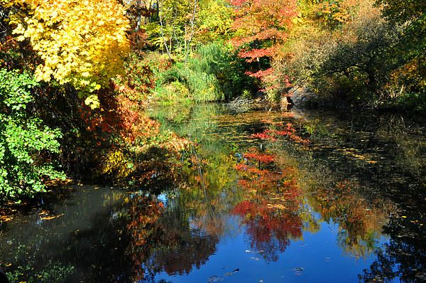 Fall colors and blue sky reflected in the lake in Central Park, NYC. Diane Greene Lent