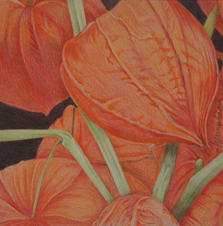 Henny Adank - Lantaarnplant