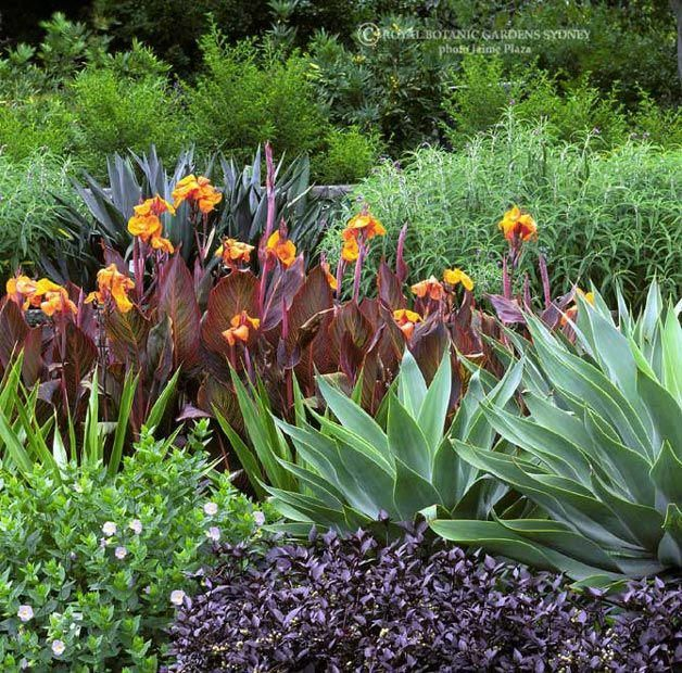 Mixed Plantings Of Agaves And Canna Lilies Plantings Gardening Landscaping Flowers Landsc Jardines Tropicales Diseno De Jardines Tropicales Plantas Jardin
