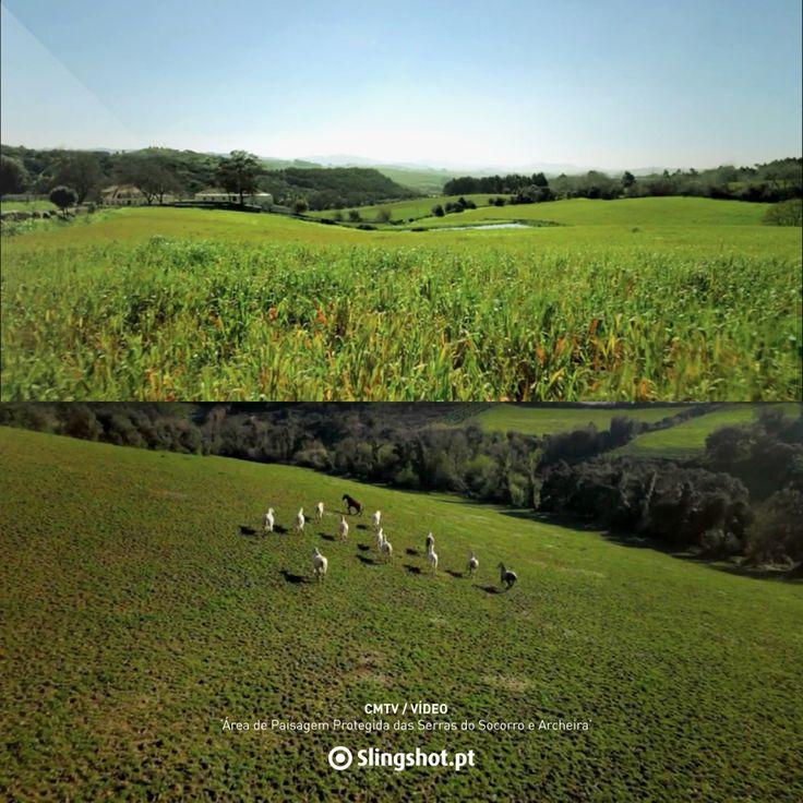 Protected Landscape Area of Serras do Socorro and Archeira https://vimeo.com/106269865