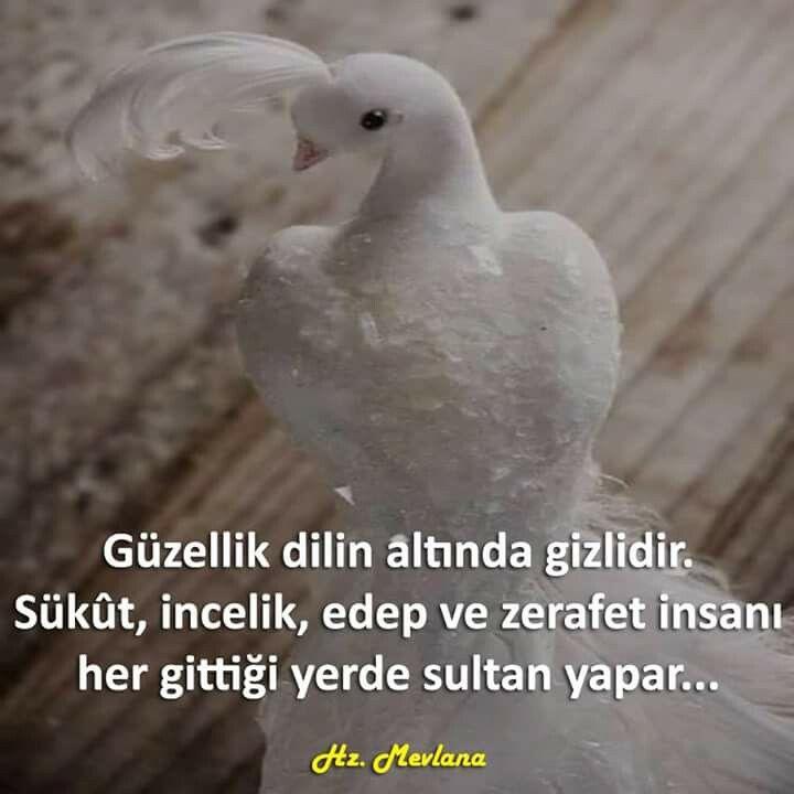 Güzellik dilin altında gizlidir. Sükût, incelik, edep ve zerafet insanı her gittiği yerde sultan yapar...   - Hz. Mevlâna  #sözler #anlamlısözler #güzelsözler #manalısözler #özlüsözler #alıntı #alıntılar #alıntıdır #alıntısözler #şiir #edebiyat