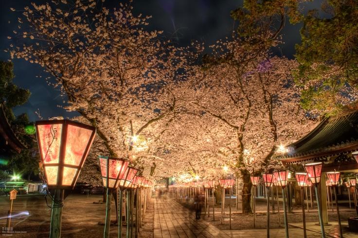 三嶋大社の夜桜 | T-FIELD