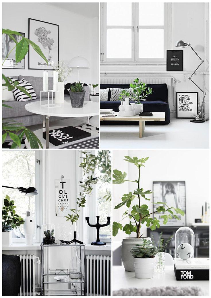 Wohnen schwarz weiß mit pflanzen zuhause wohnzimmer