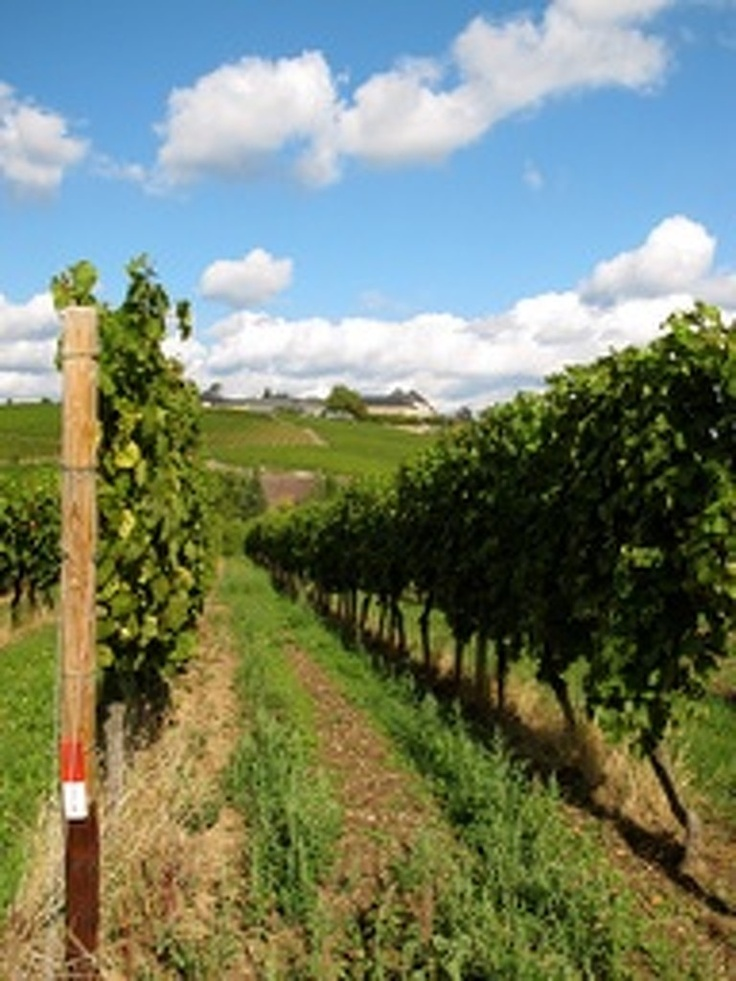 tripmii - vinyards, Rheingau, Germany