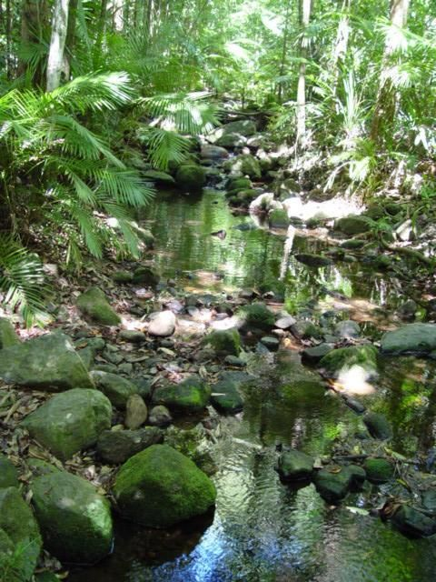 Daintree Rainforest in Australia | Stunning Places #Places