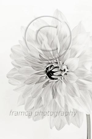 Soft  framcaphotography.com