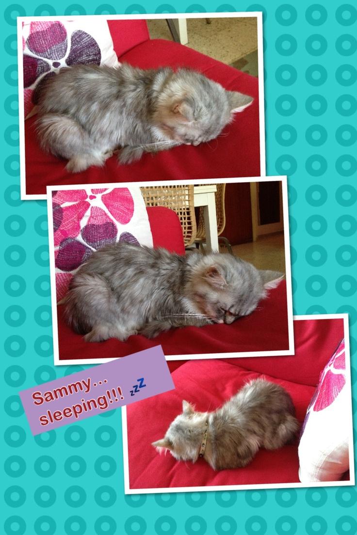 my sleeping baby ...Sam! ☺