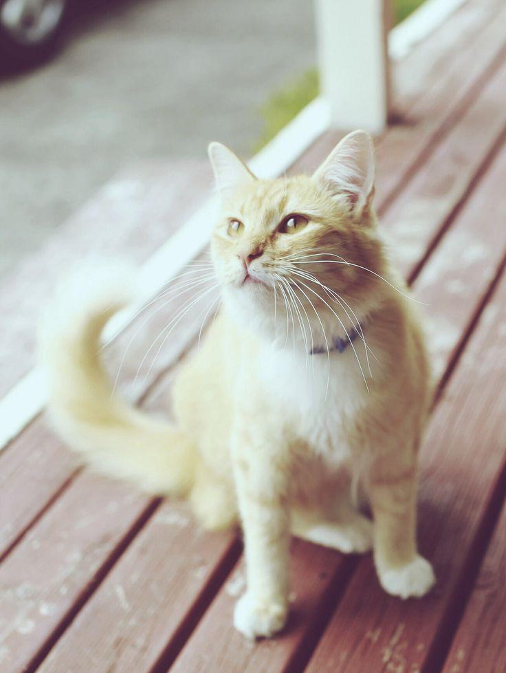 Albie the majestic cat