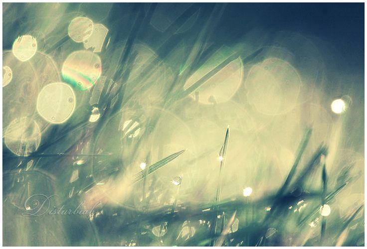 Bokehlicious II © Lady-Tori