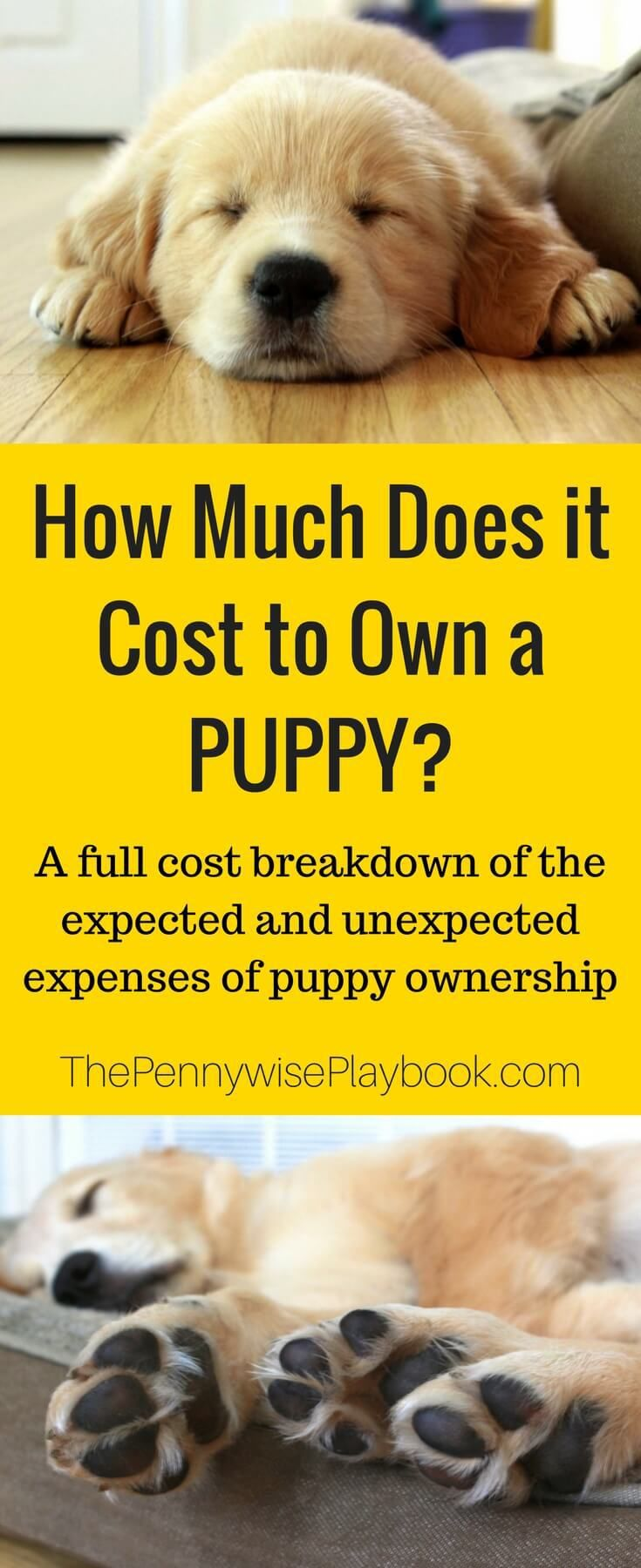 How much does it cost to own a puppy with images puppy