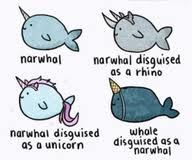 Funny Narwhal Cartoon 1000+ images about Nar...