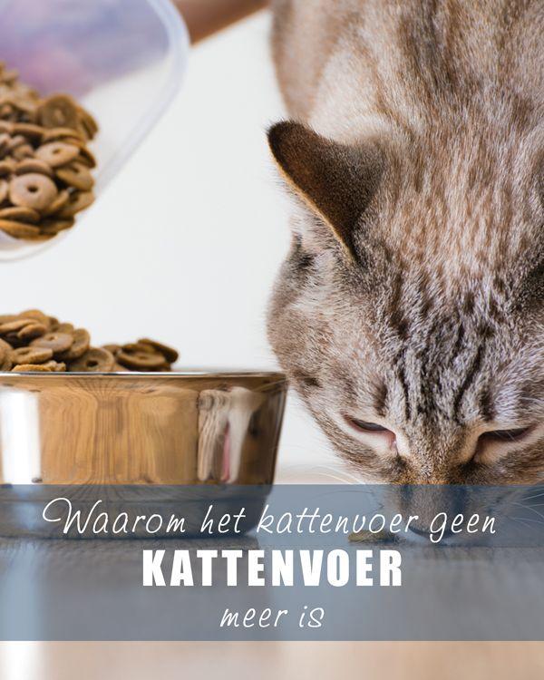 Waarom het #kattenvoer geen kattenvoer meer is.  www.voervoorkatten.nl