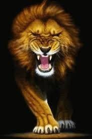 Lions Wallpaper Roar