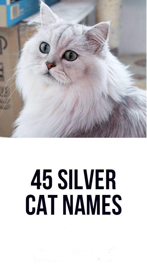370 Cat Names Ideas In 2021 Cat Names Names Cats