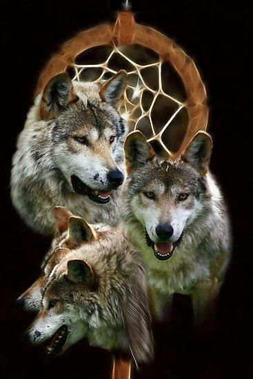 Wolves and Native American Indians | Wolves | Wolf, Wolf ...