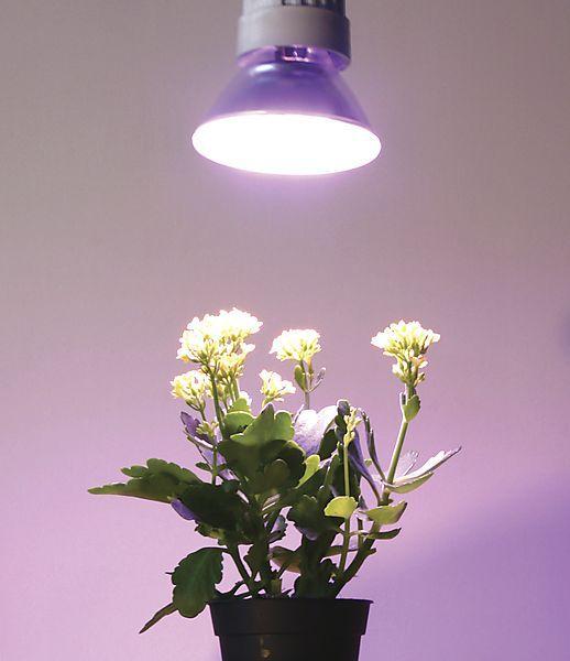 LED PAR38 plantelys E27