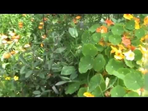 Природное земледелия на 4 сотках! Корнюшина Людмила - YouTube