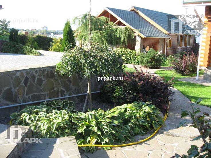 фото участкка,проектирование сада, озеленение, фото садов подмосковья, сад на склоне | Природный Парк Дизайн