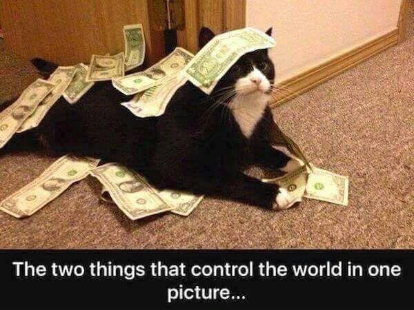 Resultado de imagen para new cat slave