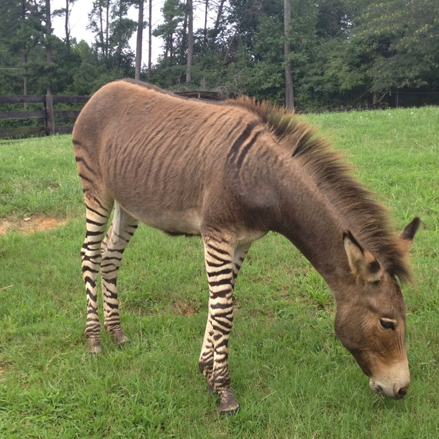 Zorse: Funny And Cute Animals