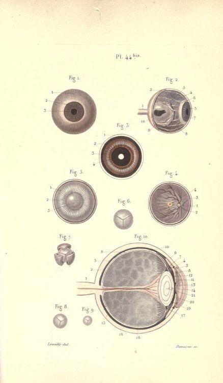 Mejores 54 imágenes de ilustraciónes científicas en Pinterest ...
