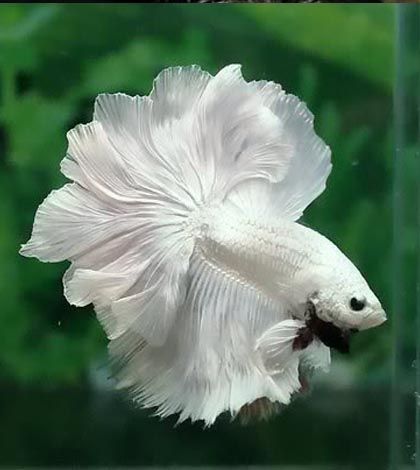 Look this gorgeous white fish!