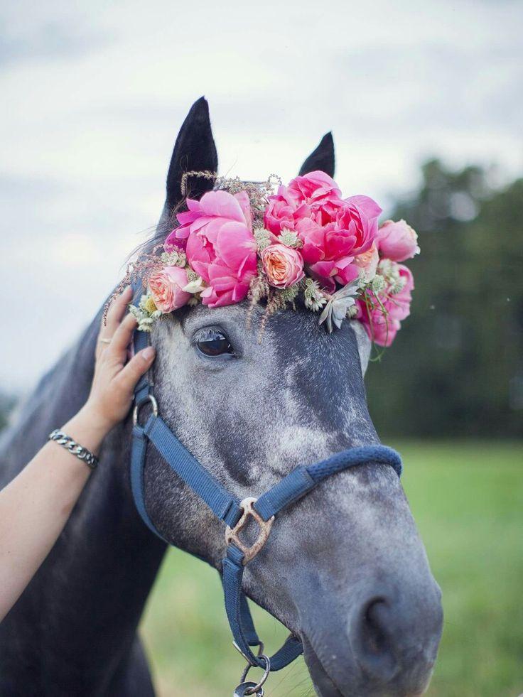 wie ist pferd schön   – Pferde❤️